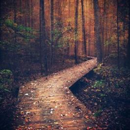 Fall foliage on a serene trail