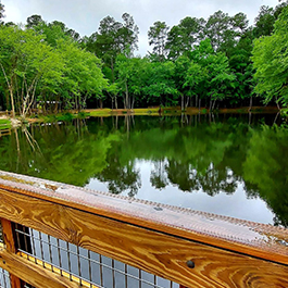 View of a pond from a wooden, elevated boardwalk over the water