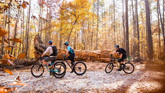 Bikers in front of the chainsaw tree art at Umstead State Park