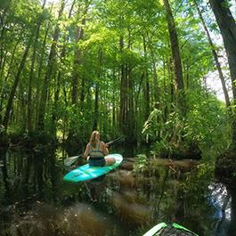 A woman kayaking through a beautiful, lush, dismal swamp
