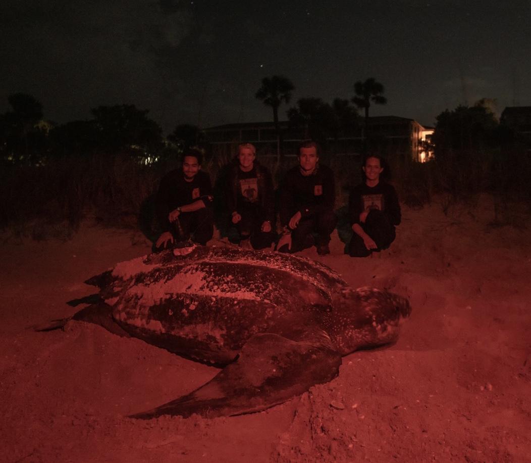 SCCF volunteers with Juniper the Leatherback sea turtle