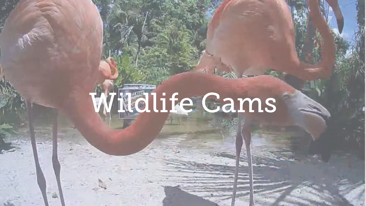 Wildlife cams